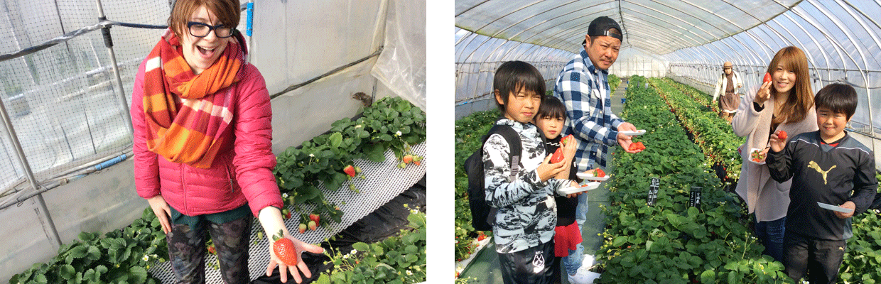 Strawberry Heaven - Yoshimura Strawberry Park